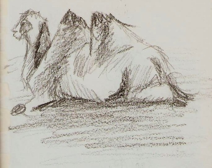 2019/07 - Zoo-sketches - Camel