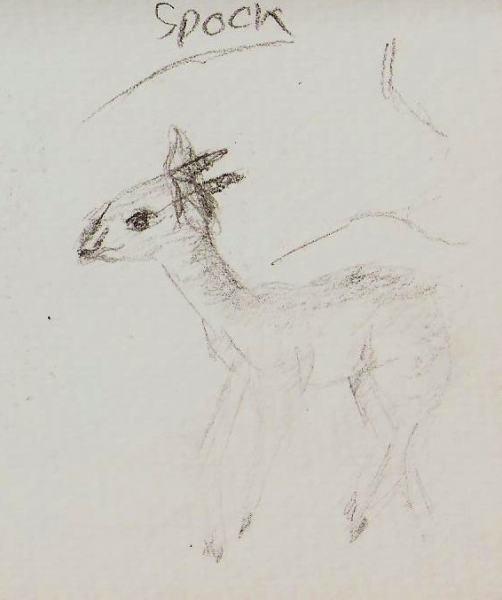 2019/07 - Zoo-sketches - Dik-dik