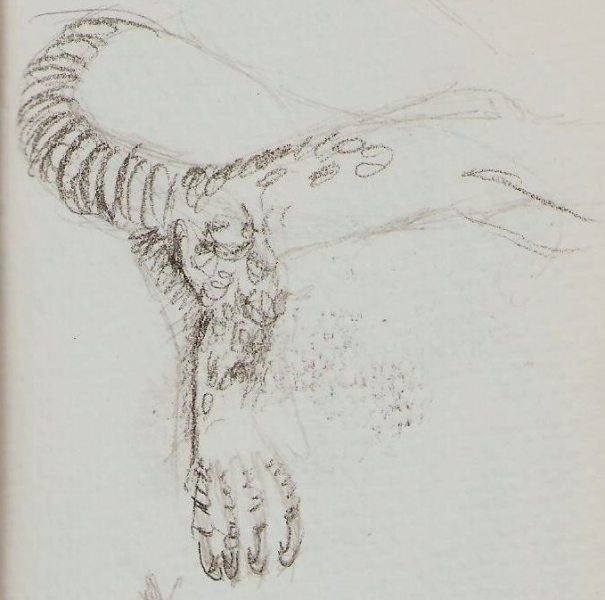 2019/07 - Zoo-sketches - Monitor