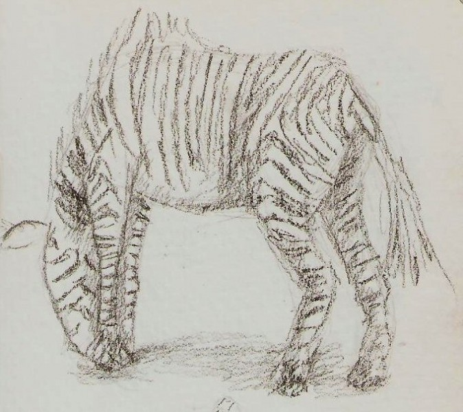 2019/07 - Zoo-sketches - Zebra