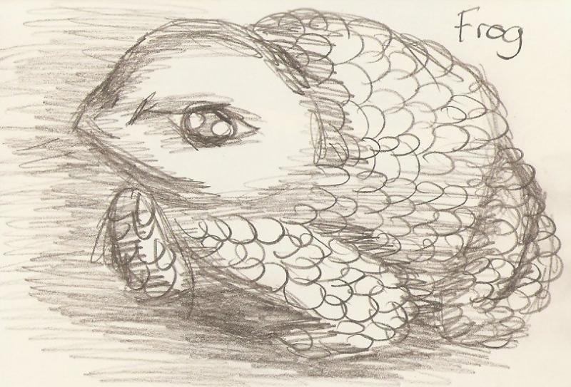 2010/02 - Frog Sketch