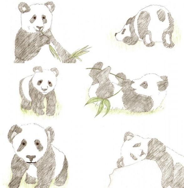 2009/12 - Panda Sketches 2