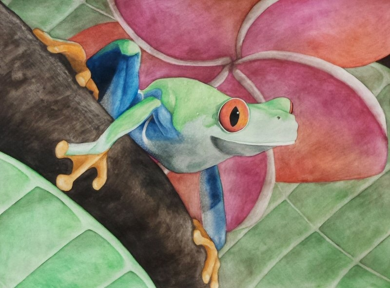 2015/12 - Red-Eyed Tree Frog