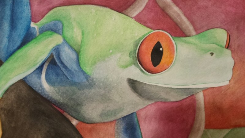 2015/12 - Red-Eyed Tree Frog Detail