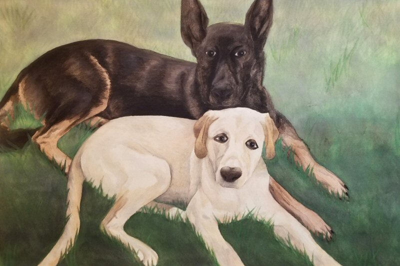 A Picture of Two Dogs